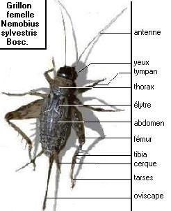 Afbarthropodes licensed for non commercial use only for Anatomie du meuble